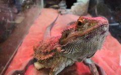 Animal Science: Behind the Scenes