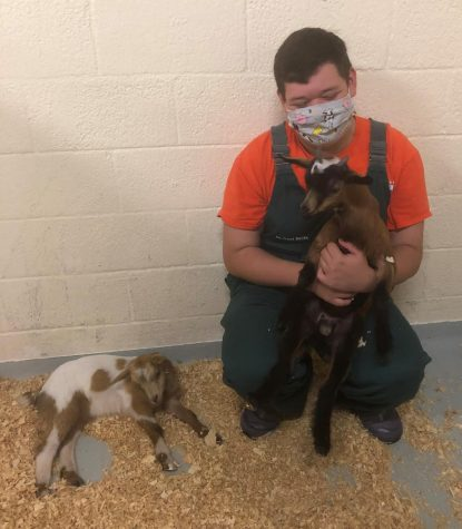Daniel Smith, senior poses with 2 young goats, Tater and Tot.