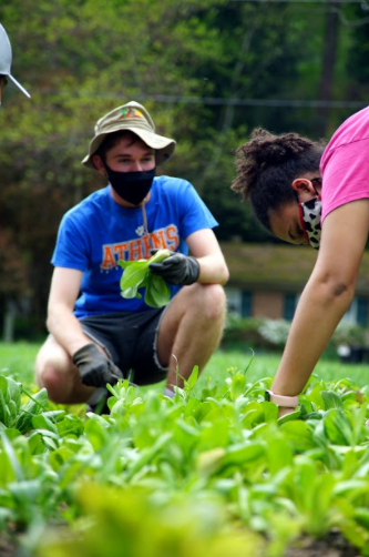 Guedira converses with senior Nina Lombardo while harvesting bok choy during a volunteering event for his community garden, April 11, 2021.
